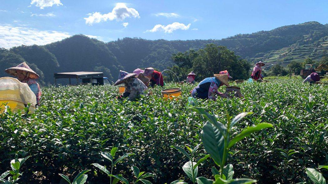 COMEBUY新北好茶,源自坪林的好山好水。業者/提供