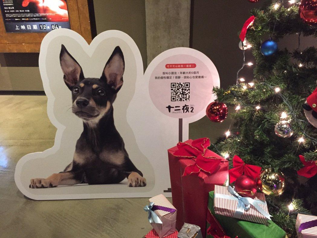 「十二夜2」狗狗立牌,只要掃描QRcode就能看到領養資訊。圖/牽猴子提供
