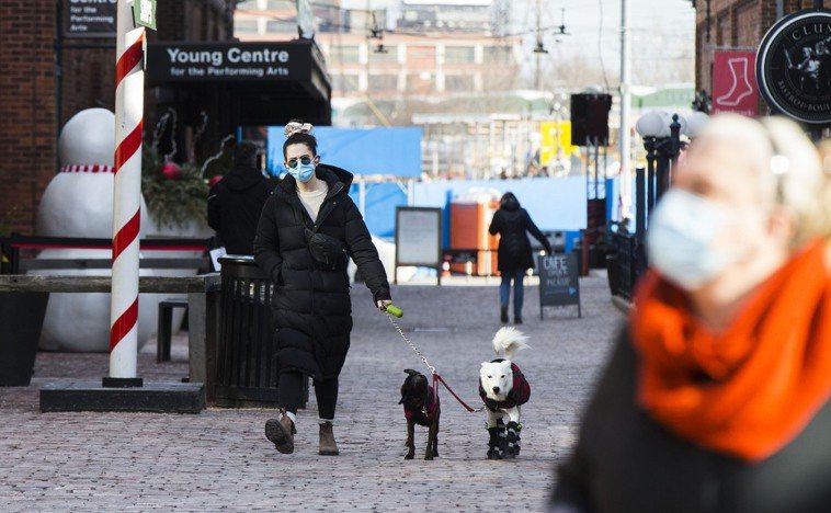 圖為加拿大多倫多街頭,一名戴口罩的女子出門遛狗。新華社