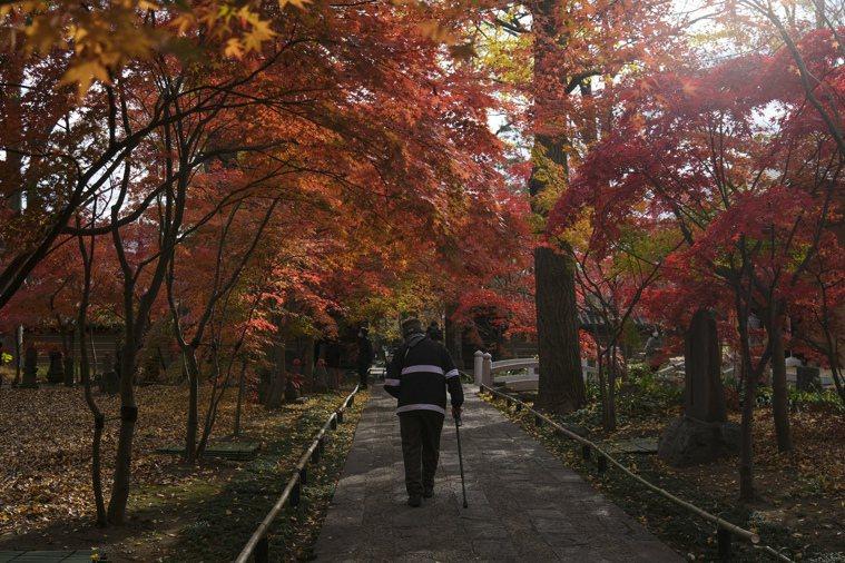 一名男子九日戴著口罩在日本東京參觀九品山唯在念佛院淨真寺的紅葉景色。(美聯社)