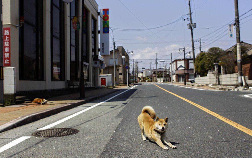「災後一個又一個的相逢與別離,牠都見證著我們的生命故事...」圖為震災後的福島。...