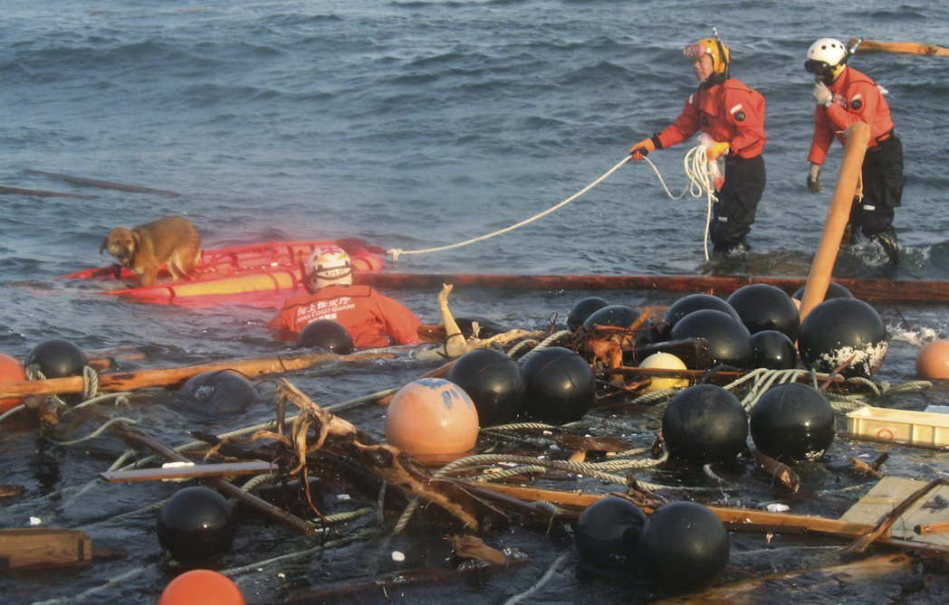 氣仙沼災後三周,在海上救到的漂流狗奇蹟。 圖/美聯社