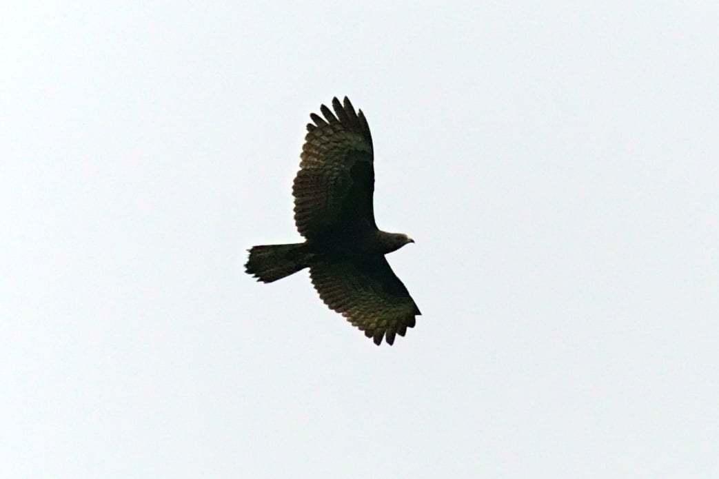 台灣猛禽研究會發現,食物鏈頂端的猛禽也難逃「窗殺」,期待社會關注鳥類保育,獲今年...