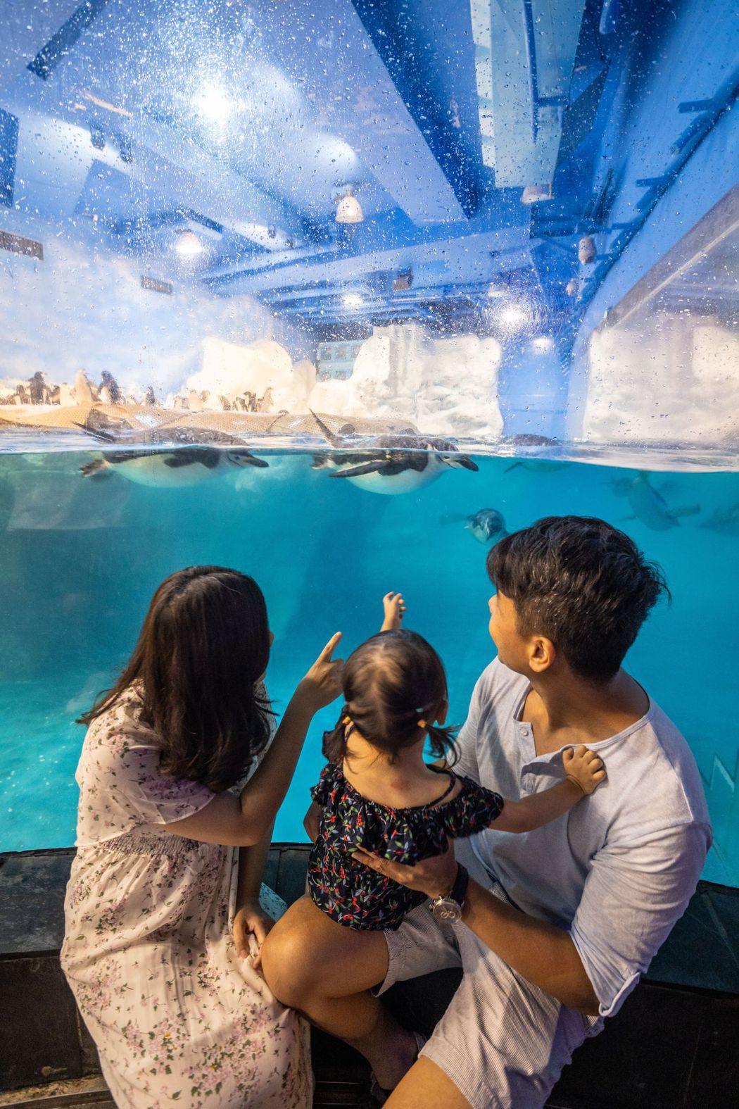 屏東海生館邀請大小朋友一起到世界水域館看企鵝寶寶。  屏東海生館/提供