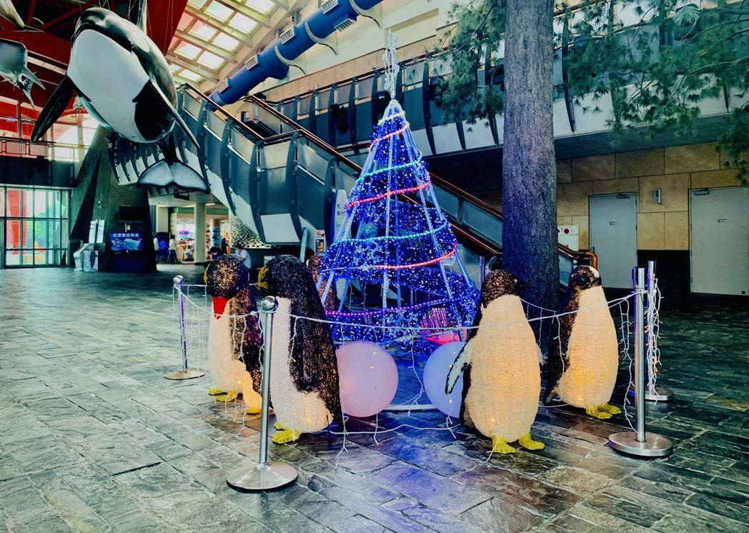 海生館內日間的企鵝聖誕樹。  屏東海生館/提供