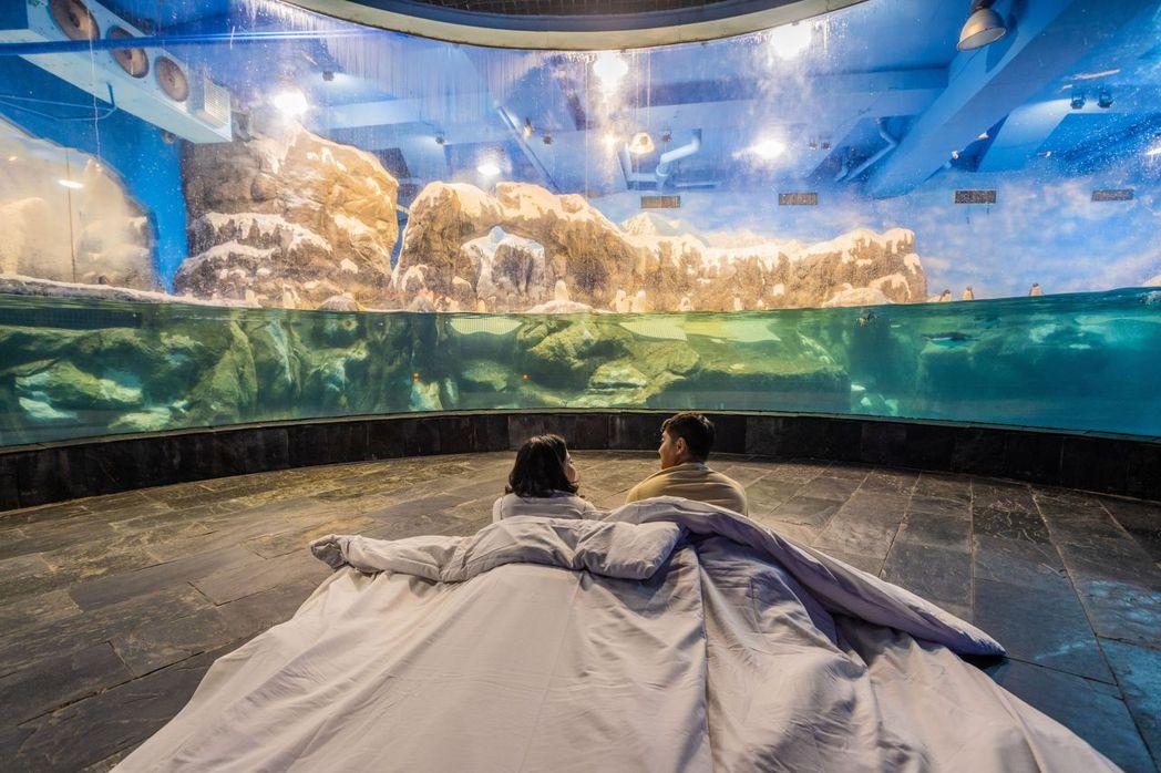 到海生館體會與企鵝寶寶一同入睡的奇妙感受。  屏東海生館/提供