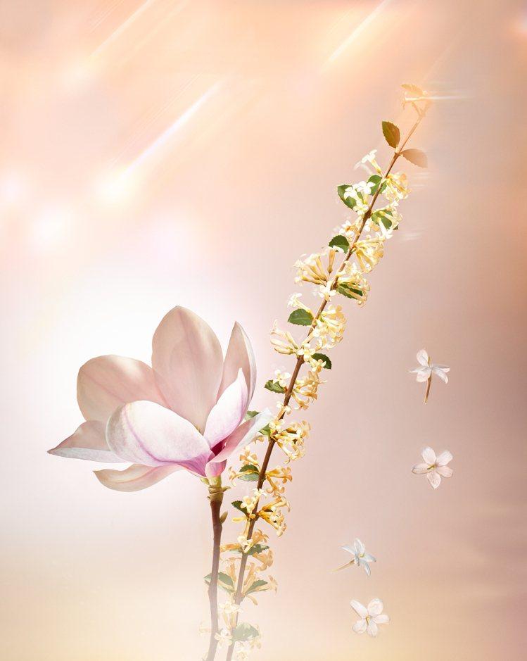 Étoile Filante以桂花、木蘭、茉莉為主調。圖/LV提供