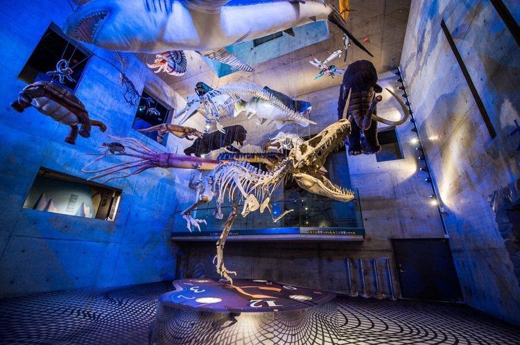 「台南左鎮化石園區」館內有大量海象和陸相生物化石。圖/KLOOK提供