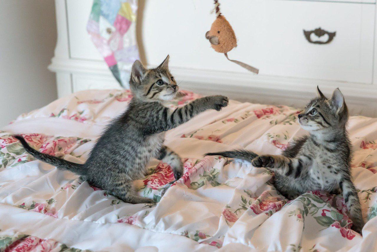 與其追著貓咪跑,防範他們,禁止讓貓咪們跳去不想讓他們去的地方,不如改造居家環境。...