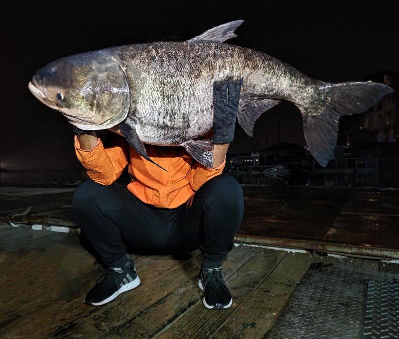 資深釣客在日月潭拉起42台斤(約25公斤)巨型大頭鰱,釣客胸口以上部位全被擋住,他還得靠手肘支撐才能將大頭鰱抱起。 粉專「日月潭一等高」/授權提供