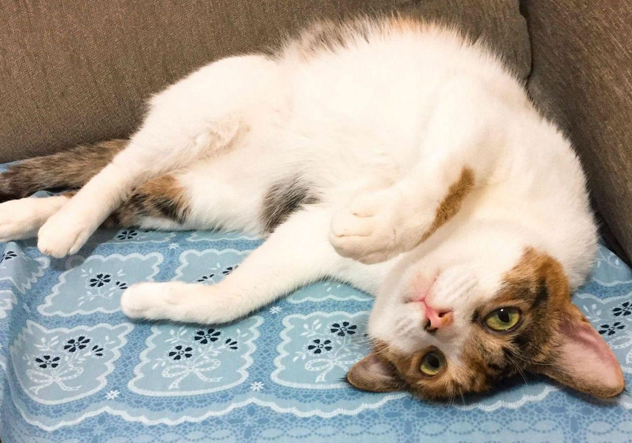 張曼娟領養了兩隻貓咪,家裡氣氛頓時活潑許多,年邁的父母也多了兩個愛撒嬌的開心果。...