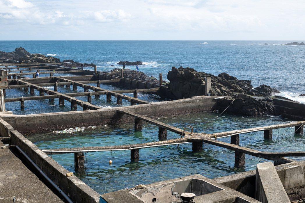 為了活化漁港,陳映伶的「台灣山海天使環境保育協會」,終於有機會和新北市農業局合作...