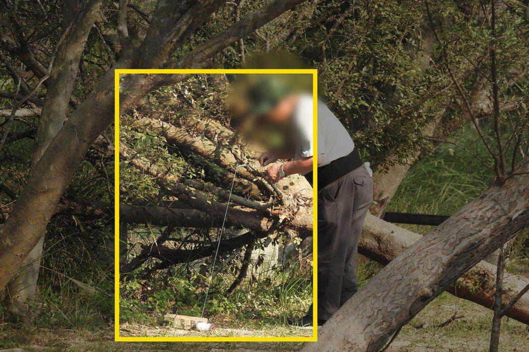 一名攝影師用絲線綁住枝條,再放置麵包蟲引誘野鳥降落覓食。圖/匿名鳥友提供