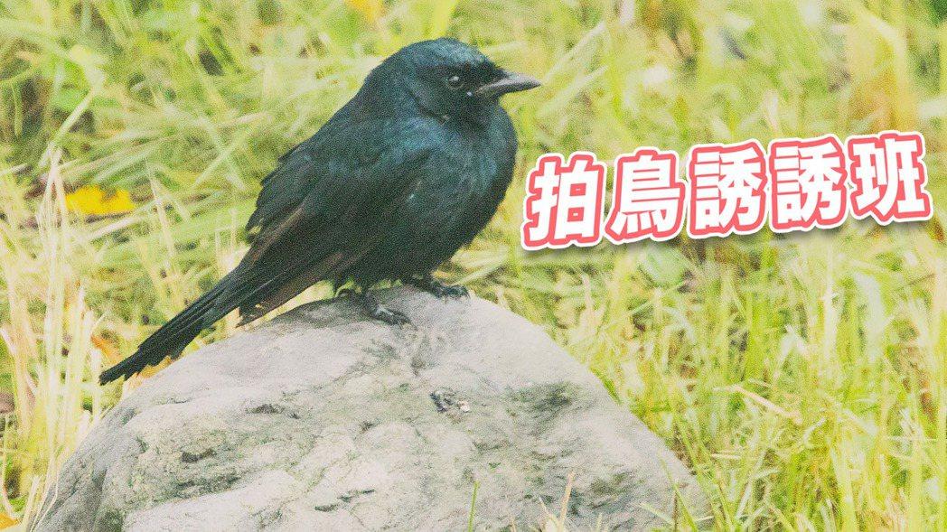 聯合報系願景工程經過三個月調查,多次隨各地鳥會在野外觀測野鳥、搜集資料,盼為保育...