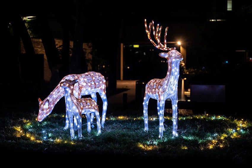 中原大學泉源之谷及科學館前的麋鹿家族燈飾營造出不同的聖誕氛圍。 中原大學/提供