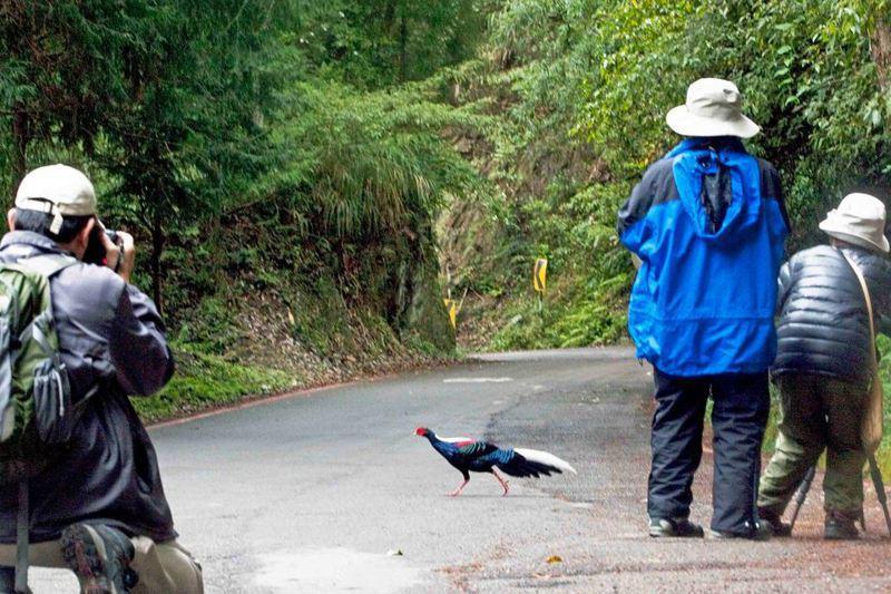 荒野保護協會創辦人徐仁修一篇臉書文章,提到「有限度的餵食,不失為吸引愛鳥觀光客的好法子」,引發生態界軒然大波。圖/取自「徐仁修荒野」臉書