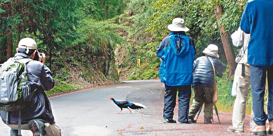 荒野保護協會創辦人徐仁修發文提到「有限度的餵食,不失為吸引愛鳥觀光客的好法子」,...