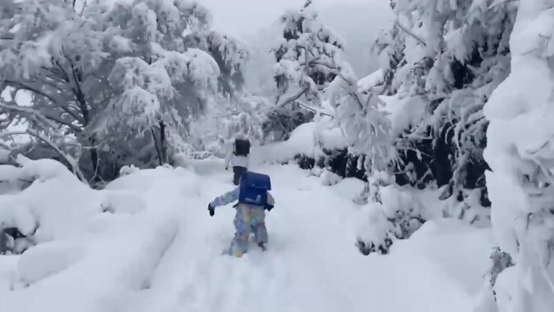 由於日本近日下起破紀錄的大雪,網友拍下小孩子在雪中趕路上學的影片。圖擷取自twitter