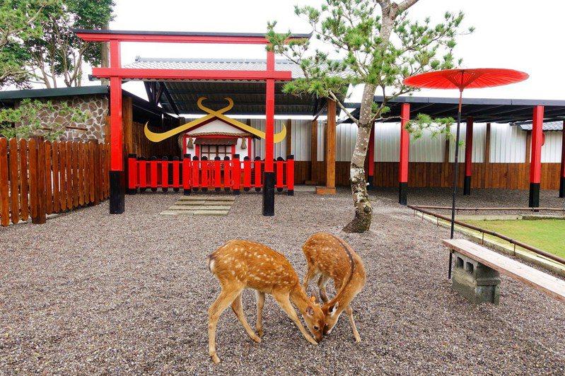 在園區喂鹿為一大療癒行程。圖/宜蘭ㄚ欣的美食日誌授權