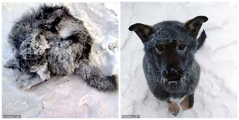 俄罗斯西伯利亚东部城市雅库茨克气温近日降到摄氏零下48度,却发生当地动物收容所空间不够,被依法圈补的流浪猫狗最后还是被迫回到街头,瑟缩发抖地卷成一团。画面翻摄:MAILONLINE(photo:UDN)