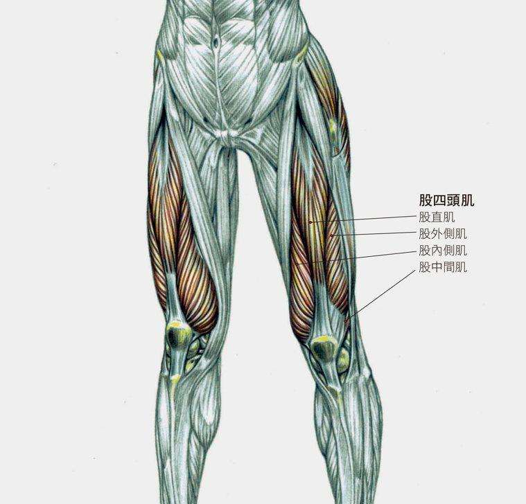圖/摘自《零風險健身!全彩圖解肌力伸展解剖全書》
