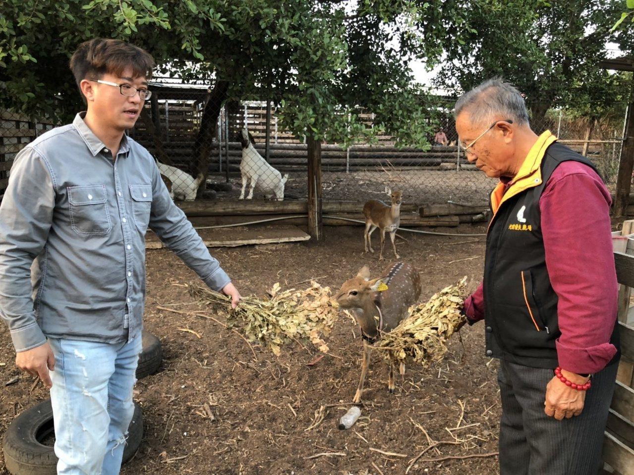 退休校長李根樂所經營的「光前休閒觀光鹿場」,是金門規模最大的,父子倆用愛照顧梅花...
