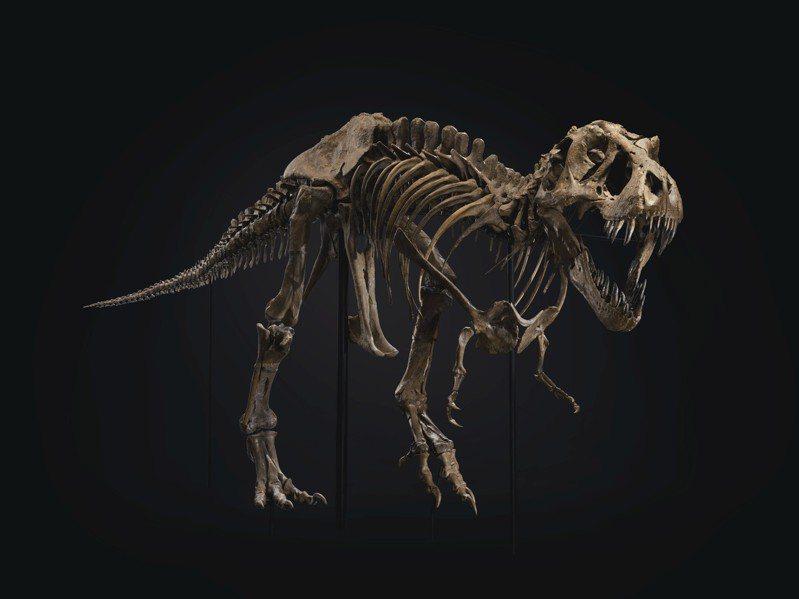 佳士得紐約10月的20世紀晚拍,在美國發現的霸王龍化石已超越拍前低估價5倍的31,84萬7,500元成交,是佳士得年度10大高價拍品中的唯一的非藝術家畫作,排名第三。圖/佳士得提供