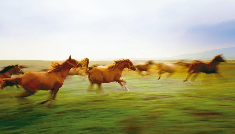馳騁草原的馬群。圖/趨勢教育基金會提供