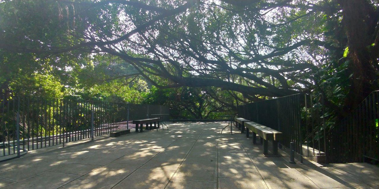 走上大樹書屋的頂樓平台,在陽光灑落的景致中深呼吸。  圖/洪郁真