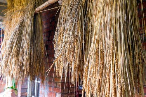 種子,也關係著文化和生態。 圖/黃基峰、陳俊羽攝影