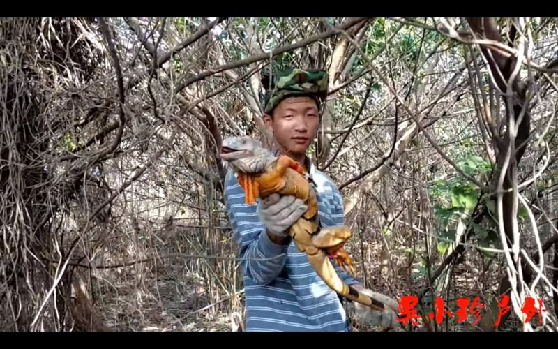 YouTuber「吳小珍」一家日前到彰化縣二林溪用彈弓捕捉綠鬣蜥,單日移除逾百隻,彰化縣農業處今天表示,二林溪綠鬣蜥可能比預估數量更多,希望能與「吳小珍」一家合作移除。圖/截自YouTube