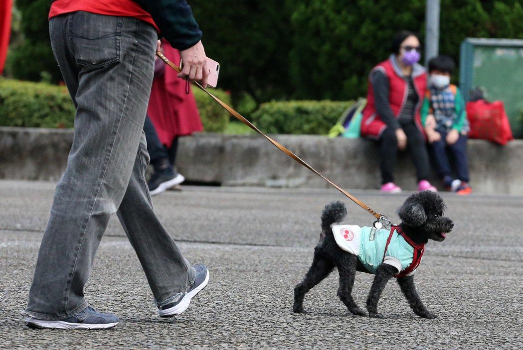 台灣的寵物醫療費用較高,可能讓民眾萌生棄養念頭,寵物保險讓飼主把經濟負擔轉嫁給產...