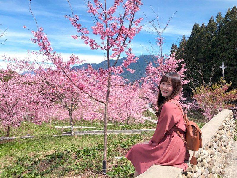 ▲全台櫻花季賞櫻景點推薦-信義鄉草坪頭。(圖/mikuhsu0417, Instagram)