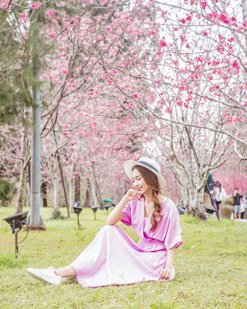 ▲2021全台櫻花季賞櫻景點推薦-九族文化村櫻花祭。(圖/sienna_0409, Instagram)