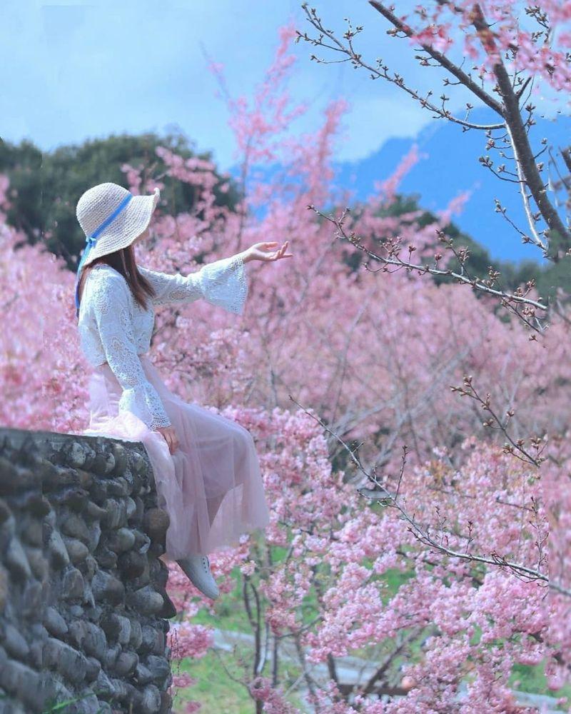 ▲全台櫻花季賞櫻景點推薦-福壽山千櫻園。(圖/3more_hi4, Instagram)