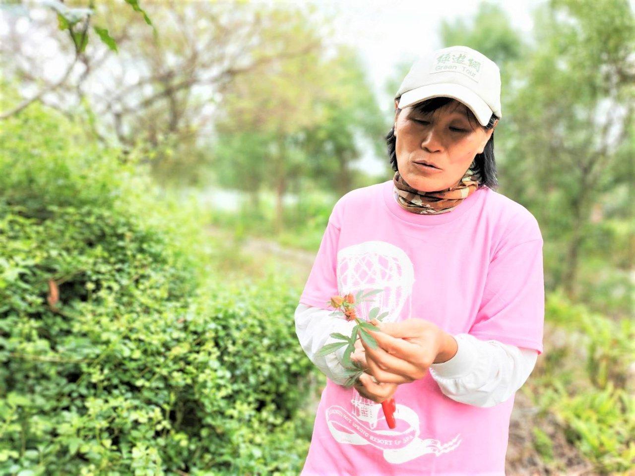 鄭玉桂雖然學商,卻一直親近大自然,自稱是「不務正業」。 圖/鹿鳴自然農園提供