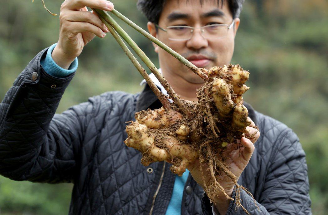 徐仲走訪新竹農家,向薑農交流食材想法。記者余承翰/攝影