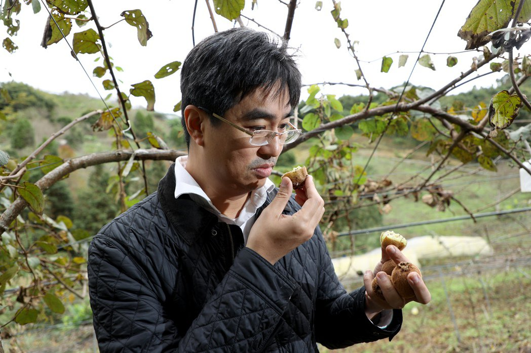 徐仲對台灣奇異果的栽種成果相當有興趣。記者余承翰/攝影