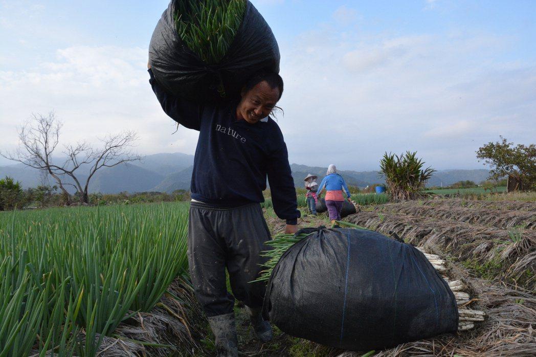 徐仲初期跑產地就被台灣食材的豐富性與農友的投入深深吸引。圖/徐仲提供