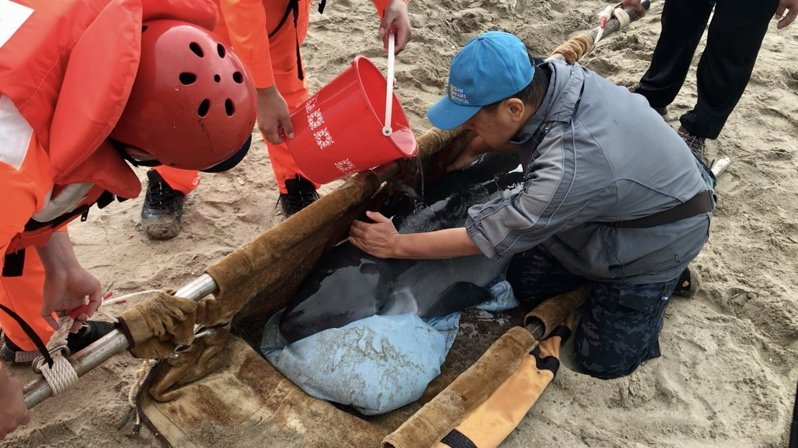 郭祥廈(右)說,救鯨豚是為人類贖罪,因為人類加速自然環境的改變。記者游明煌/攝影