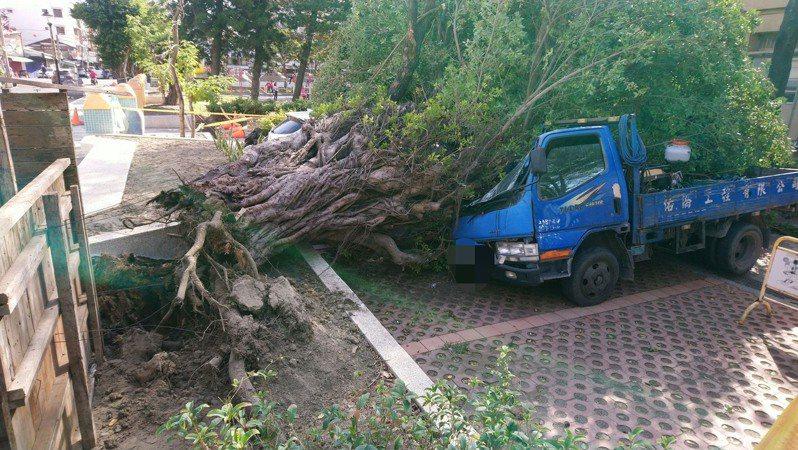 雲林縣北港南陽國小旁的百年老榕樹被強風吹倒,不慎砸到一旁停放的施工貨車,導致右側車頭毀損,校方將透過公共意外責任險賠償車輛損失。圖/民眾提供