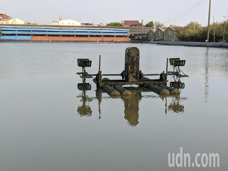 養殖業者會在寒流來襲時,會加深水位,持續以抽水馬達替換水池內的水,並持續運轉水車來調節水溫。記者陳弘逸/攝影