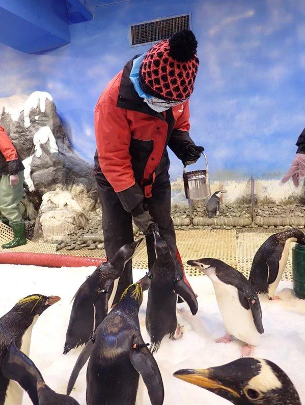 屏東海生館「我與企鵝的0 1毫米」餵食體驗,將由KLOOK獨家販售。 圖/KLO...