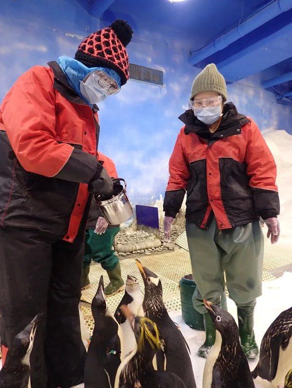 屏東海生館推出全台首次「我與企鵝的0 1毫米」餵食體驗,被稱為「2021年最值得...