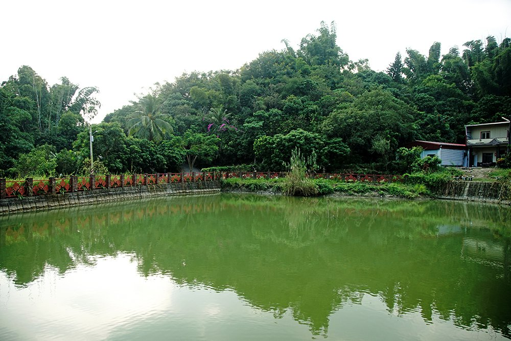 內興社區的青春埤,在農村再生計畫重現風華;日治時代居民飲用及灌溉用水,都是青春埤...