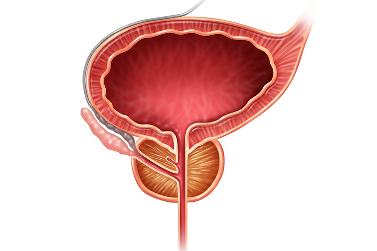 攝護腺暴露在體內的睪固酮當中,時間越久會變得越大,所以你活得越久,攝護腺就會越大...