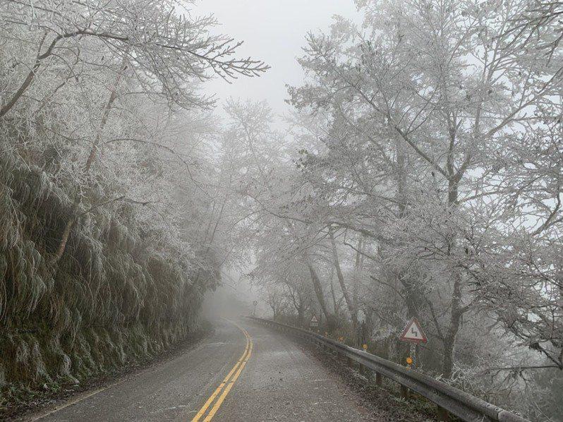 太平山國家森林遊樂區整夜零下低溫,31日早晨園區樹枝結滿霧淞。圖/太平山莊提供