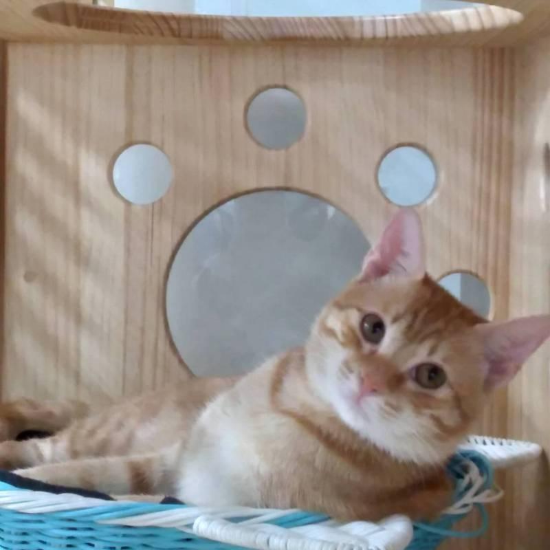 高雄捷運橋頭糖廠站的貓站長「蜜柑」,很受歡迎,連減少值勤時休個「寒假」也得公告周知。圖/高雄捷運公司橋頭糖廠站提供