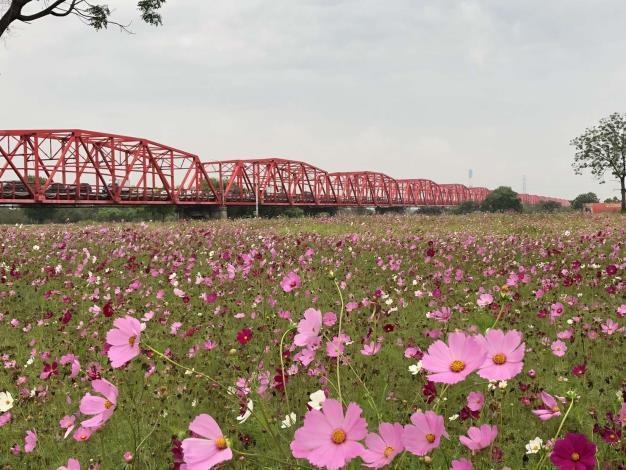 西螺大橋的遊客數也逐年增加。圖/雲林縣府提供