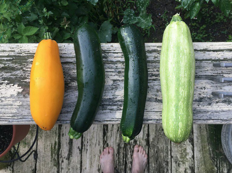 各種櫛瓜。圖/Pixbay